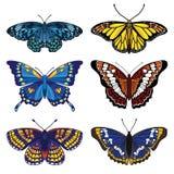 Vektor eingestellt mit sechs Schmetterlingen Stockfotografie