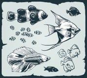 Vektor eingestellt: Weinleseillustration von Fischen Stockfotos