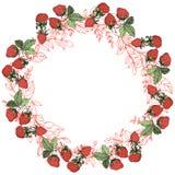 Vektor-Erdbeerfrüchte grünes Blatt Rote und grüne gravierte Tintenkunst Feldgrenzverzierungsquadrat stock abbildung