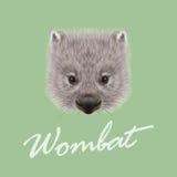 Vektor erläutertes Porträt des Wombats vektor abbildung