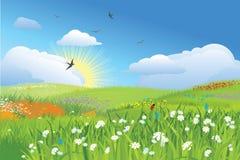 vektor för äng för colorfullblommagräs Arkivfoton