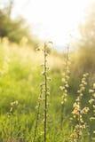 vektor för blommagräsillustration royaltyfria bilder