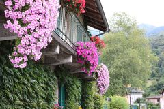 vektor för blommahusillustration Royaltyfria Bilder