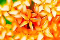 vektor för detaljerad teckning för bakgrund blom- Royaltyfri Fotografi