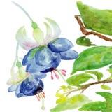 vektor för detaljerad teckning för bakgrund blom- För sommarbröllop för vattenfärg blom- kort fuchsia Arkivbilder