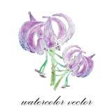 vektor för detaljerad teckning för bakgrund blom- För sommarbröllop för vattenfärg blom- kort lilja fl Royaltyfri Foto