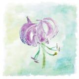 vektor för detaljerad teckning för bakgrund blom- För sommarbröllop för vattenfärg blom- kort lilja fl Arkivbilder