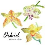 vektor för detaljerad teckning för bakgrund blom- För sommarbröllop för vattenfärg blom- kort orkid f Arkivbilder