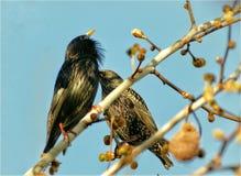 vektor för fågelillustrationförälskelse Arkivfoto