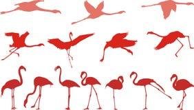 vektor för flamingoillustrationpink Arkivfoto
