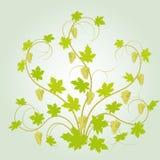 vektor för form för bakgrundsdruvor lfloral Royaltyfria Bilder