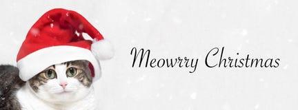vektor för illustration för banerjul eps10 Förtjusande katt i den Santa Claus hatten TextMeowrry jul arkivfoto