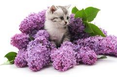 vektor för illustration för 10 katteps-blommor Arkivbilder