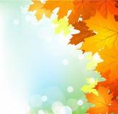 vektor för ljusa leaves för höstbakgrund solig Royaltyfri Foto