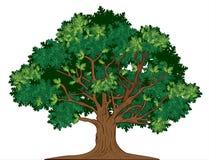 vektor för oaktree Arkivfoton