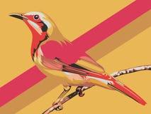 vektor för 3 serie för fågeltecknad filmillustration Arkivfoto