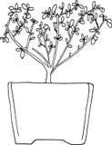 Vektor för Serissa Foetida bonsaiträd royaltyfria bilder