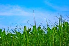 vektor för sky för bakgrundsgräsillustration Royaltyfri Bild