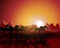 vektor för solnedgång för silhouette för bakgrundshästillustration Royaltyfri Fotografi