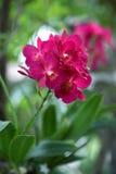 vektor för sommar för orchids för bukettsammansättningsillustration Fotografering för Bildbyråer
