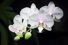 vektor för sommar för orchids för bukettsammansättningsillustration arkivfoto