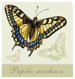 vektor för swallowtail för fjärilsillustrationpap Arkivfoto
