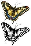 vektor för swallowtail för fjärilsillustrationpap Royaltyfri Foto