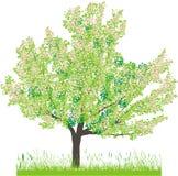 vektor för tree för Cherryillustrationfjäder Arkivbild