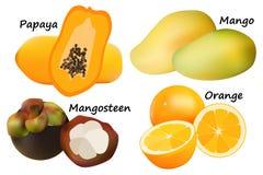 Vektor för tropisk frukt Arkivbilder