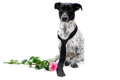 vektor för valentin för pardagillustration älska Royaltyfria Bilder