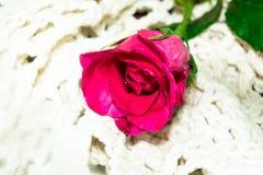 vektor för valentin för pardagillustration älska Royaltyfri Foto