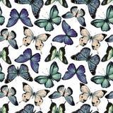 Vektor för vattenfärgfjärilsmodell royaltyfri illustrationer
