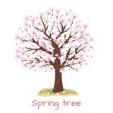 Vektor för körsbärsrött träd för vårblomning Arkivbild