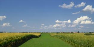 vektor för sommar för liggande för illustration för bakgrundseniromentfält Royaltyfri Fotografi