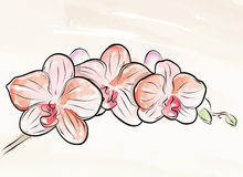 Gemalte Orchidee Lizenzfreies Stockbild
