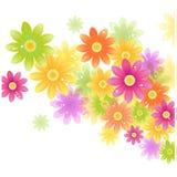 Vektor Gerbera-Blumenhintergrund Lizenzfreies Stockbild