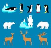 Vektor-gesetzte arktische und antarktische Tiere Pinguin, Eisbär, Ren Lizenzfreies Stockfoto