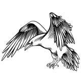 Vektor-Illustration einer Krähe Skizzierter kleiner Rabe vektor abbildung
