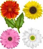 Vektor-Illustrationen der Sonnenblumen-Familie Stockfotos
