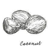 Vektor-Illustrationsskizze der Kokosnuss gesetzte Hand gezeichnete lizenzfreie abbildung