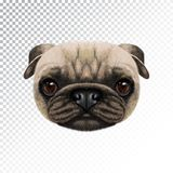 Vektor illustrerad framsida av mopshunden vektor illustrationer