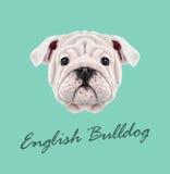 Vektor illustrerad stående av den engelska bulldoggvalpen vektor illustrationer