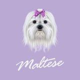Vektor illustrerad stående av den maltesiska hunden vektor illustrationer