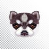 Vektor illustrerad stående av Husky Puppy vektor illustrationer