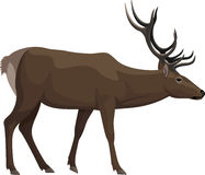 Vektor isolerade hjortar stock illustrationer