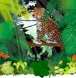 Vektor Jaguar, Leopard im Dschungel-Regenwald Stockbilder