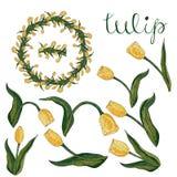 Vektor lokalisierte gelbe Tulpe auf Weiß vektor abbildung