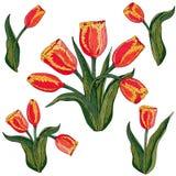 Vektor lokalisierte rote Tulpe auf Weiß vektor abbildung