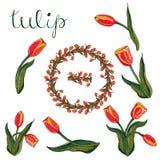 Vektor lokalisierte rote Tulpe auf Weiß stock abbildung