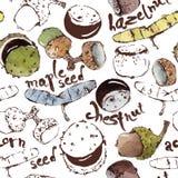 Vektor-nahtloses Muster mit Semipainted-Aquarell-Samen, Nüsse Lizenzfreie Stockbilder